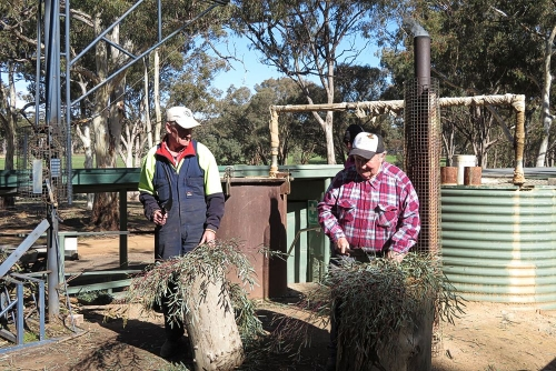 Workers making eucalyptus oil